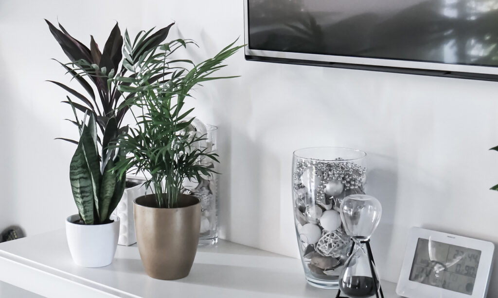 rośliny które oczyszczają powietrze z toksyn
